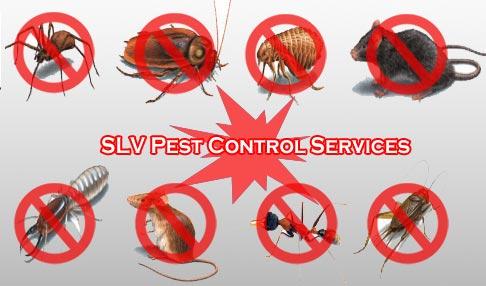 BR Pest Control