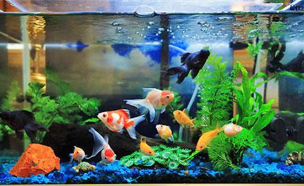 Lokesh Aquarium